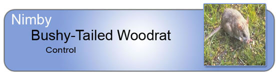 Nimby Pest Management - Bushy Tailed Wood Rat Control