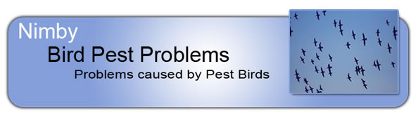 bird-pest-problems